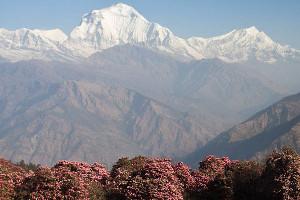 trekking-in-nepal-dhaulagiri