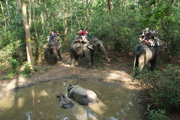 places-to-visit-in-nepal-Chitwan-National-Park