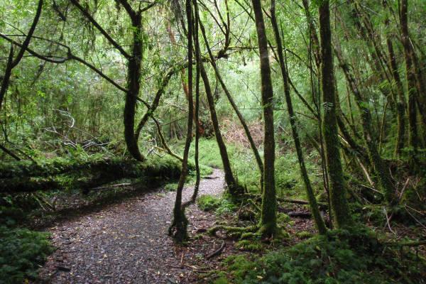 easy-treks-in-patagonia-alerce-andino-national-park