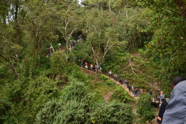 Marangu-route-1