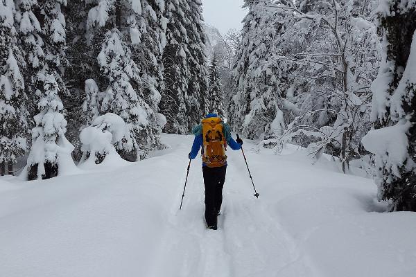 best-trekking-poles