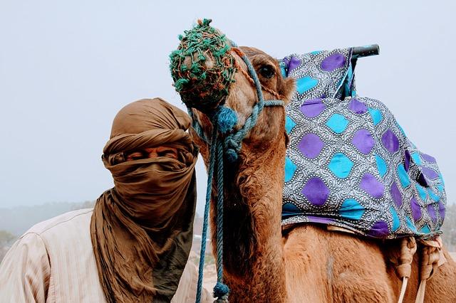 Trekking in Morocco Features Camel