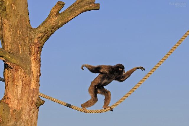 Trekking in Morocco Ifrane National Park Berber Monkey