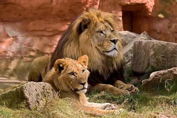 Things to do in Tanzania - Safari