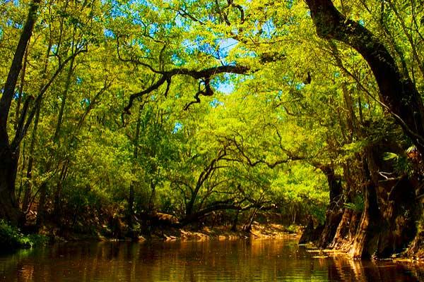 Aucilla-River-on-the-Florida-Trail
