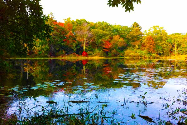 Hiking-near-Boston-Ipswich-River-Wildlife-Sanctuary