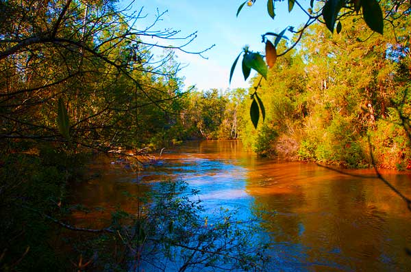 Juniper Creek on the Florida Trail