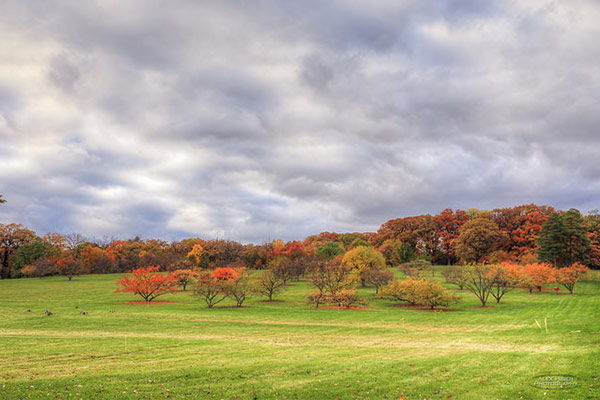 Morton Arboretum