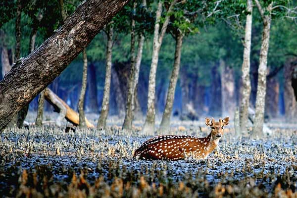 Sundarbans-Things-to-do-in-India