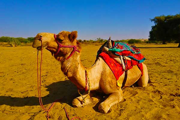 Thar-Desert-Things-to-do-in-India