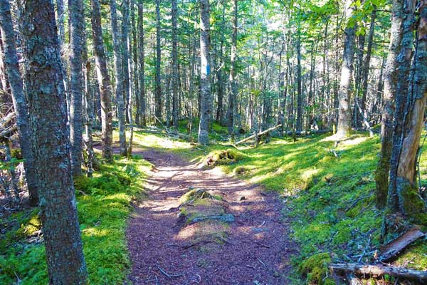Cutler-Coast-Trail-1