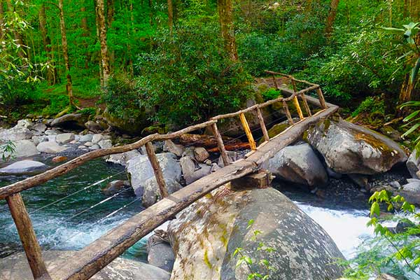 Porters Creek Trail Smoky Mountain