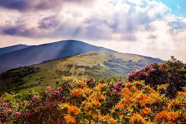 Roan-Mountain-Appalachian