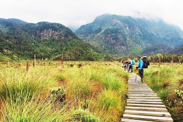 Margherita-Peak-Rwenzori