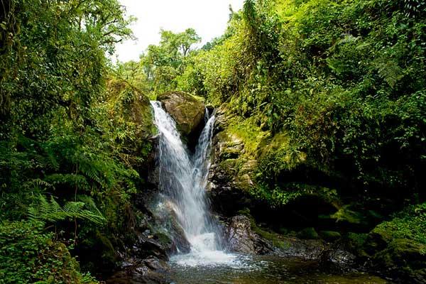 Rwenzori-Forest-Hikes