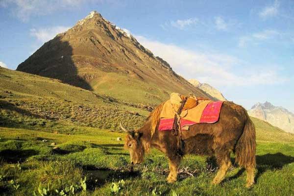 Baroghil-Pass-Eastern-Hindu-Kush-Asia
