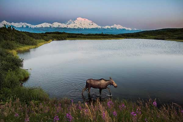Denali-Alaska-Mountain-Range