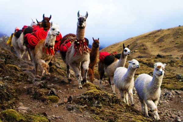 Lares-to-Patacacha-Weavers-Way