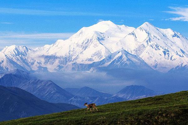Denali-Alaska-North-America-Wildlife