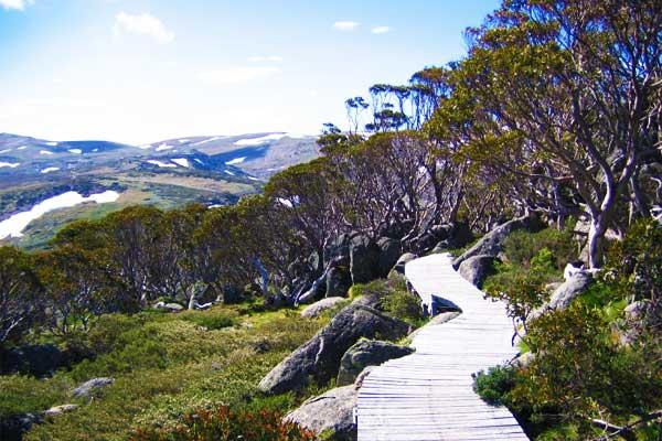 Kosciuszko-Walk-Australian-Alps