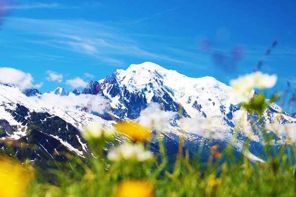 Mont-Blanc-Summer-Flowers