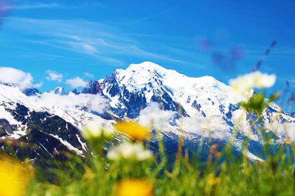 Mont-Blanc-Summer-Flowers