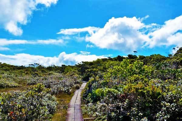 Alaka-i-Swamp-Trail-Kauai-Hawaii-USA