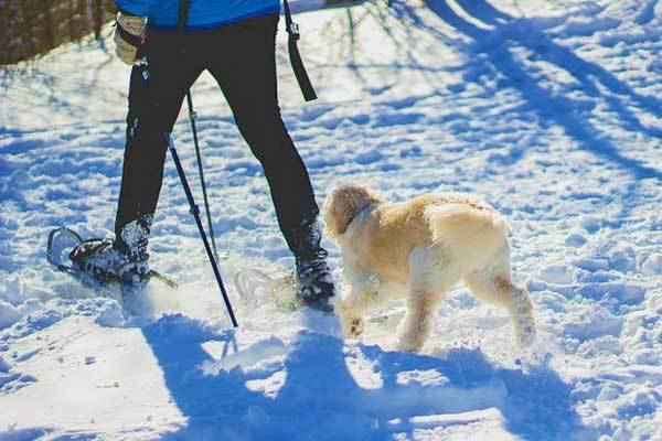 Best-Snowshoes