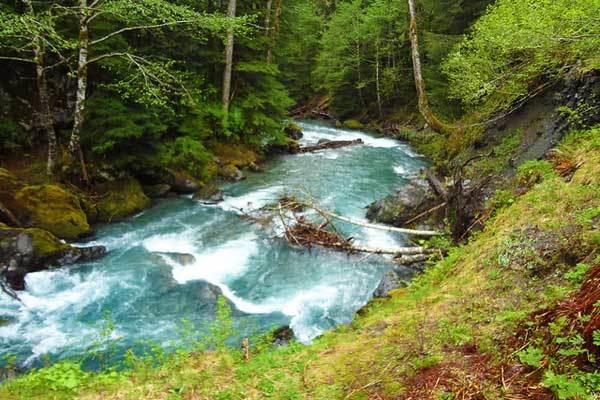 East-Fork-Quinault-River-Washington-Olympic-Park-USA