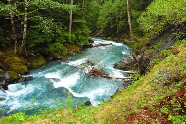 East-Fork-Quinault-River-Washington-Olympic-Park-USA