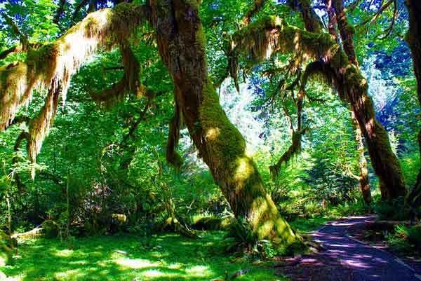Hoh-Rain-Forest-Olympic-Park-USA-Washington