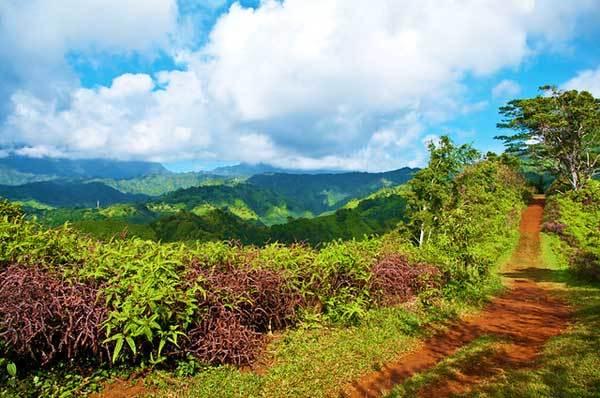 Kuilau-ridge-Trail-Kauai-Hawaii-USA