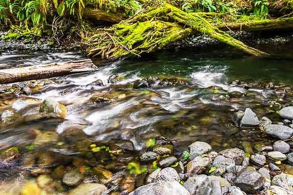 Barnes-Creek-Lake-Crescent-Washington-USA