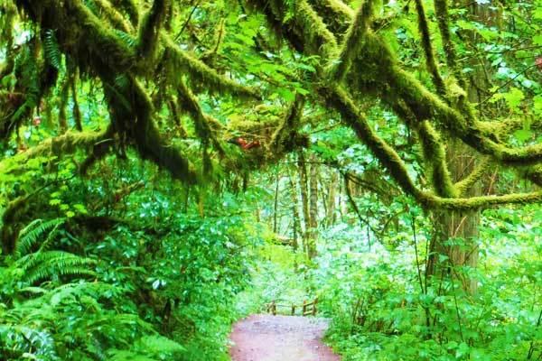 Lower-Macleay-Trailhead-Portland-Oregon-USA