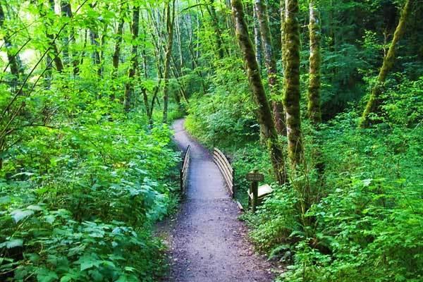 Tryon-Creek-Portland-Oregon-USA