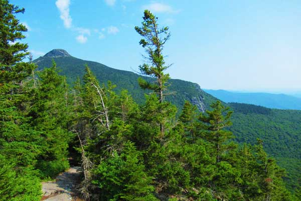 Camels-Hump-Hike-Forest-Trail