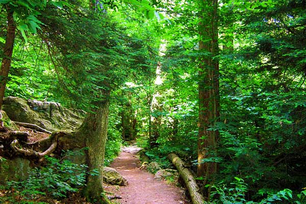 Appalachian-Trail-PA-Pennsylvania-State-Park