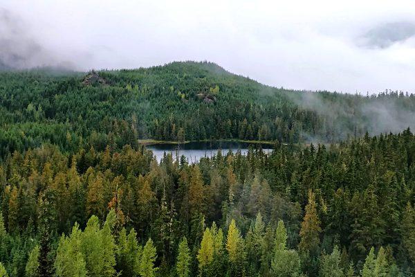 whistler-hikes-ancient-cedar-trail