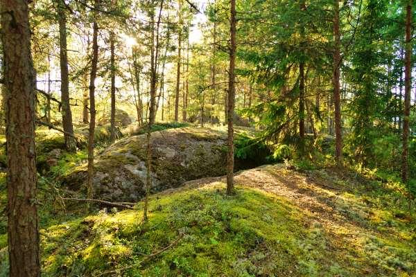 Santalahti-forest-hike