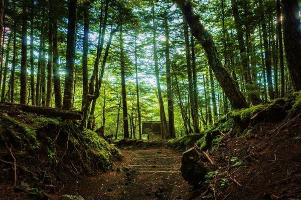 Subashiri-Trail-hiking-Mount-Fuji