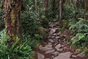 ranau-trail-kinabalu