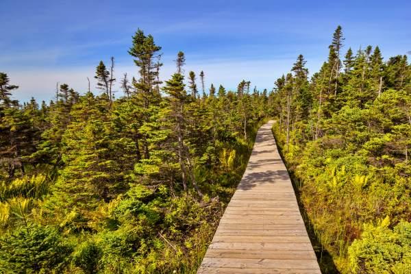 skyline-trail-canada