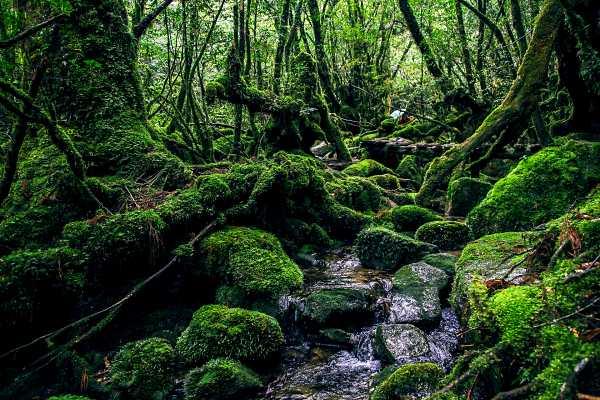 yakushima-hiking-in-japan
