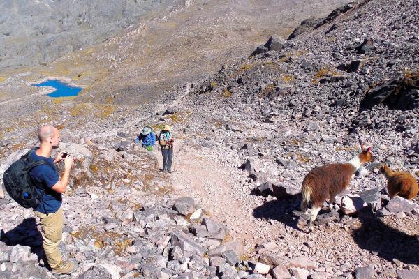lares trail alpaca